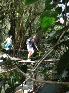 Hike through Cocora Valley